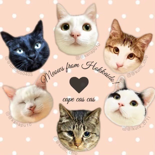 【CANCELLED】Cape cas cas What we believe we can do for the wellbeing of cats: Sale of charity merchandise for rescue cats image